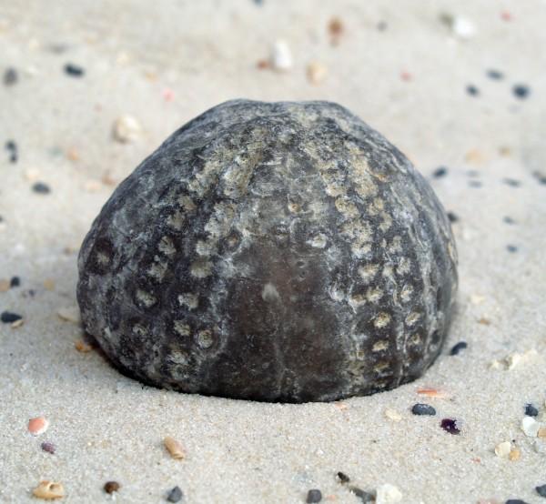 pedra starfish fossil agua salgada mar