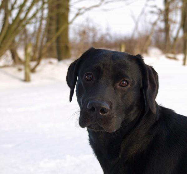 retrato de cachorro na neve