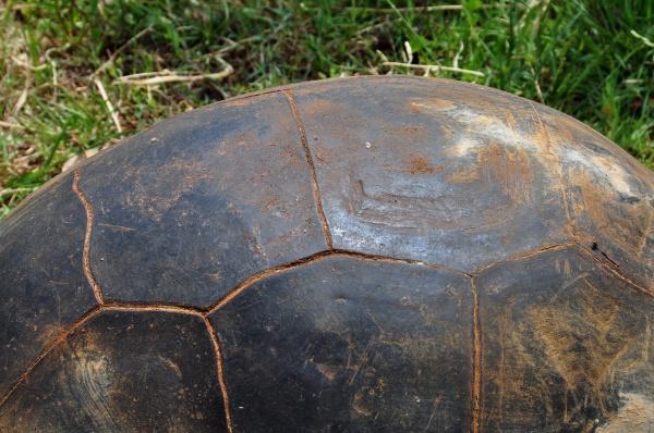 close up detalhe enorme closeup animal
