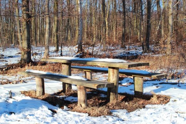 mesa de floresta de madeira no