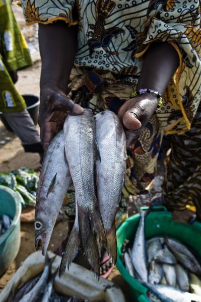 pessoa segurando peixe vila de pescadores