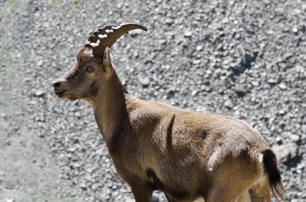 passeio viajar parque animal mamifero marrom