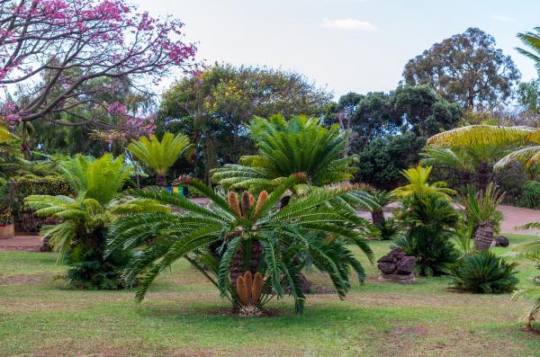 botanical, garden, monte - 28215458