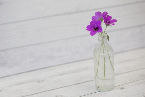 vida, morta, com, pequenas, flores, cor-de-rosa - 28215359