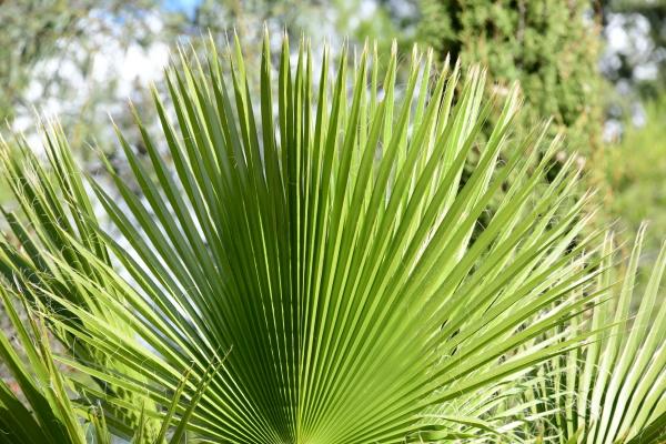 folhas, de, palmeiras, na, província, de - 28217685