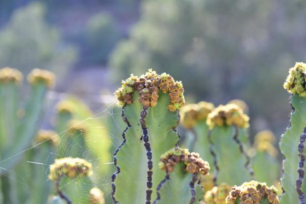 um, cacto, em, flor, na, província - 28218117
