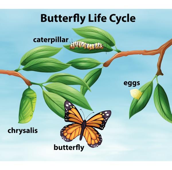 diagrama do ciclo de vida das
