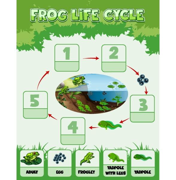 diagrama mostrando ciclo de vida de