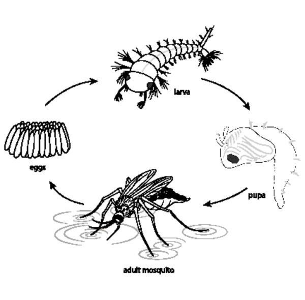 doodle do diagrama do ciclo de