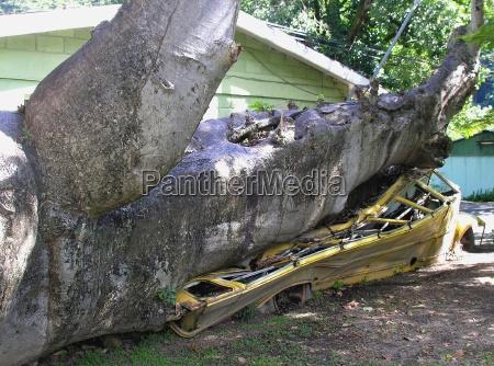 arvore destruicao destruido dano infortunio desastre