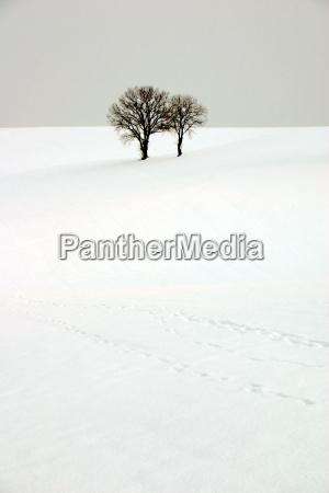 arvore arvores topo inverno frio caucasiano