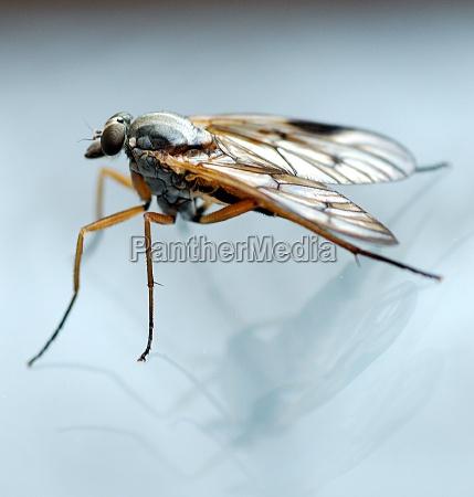 close up inseto reflexao voar estrutura
