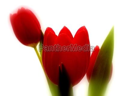 natureza morta luz opcional flor planta