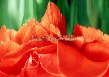 belo agradavel close up composicao flor