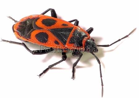 pernas close up opcional inseto olho