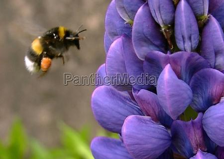 close up voo inseto flor planta