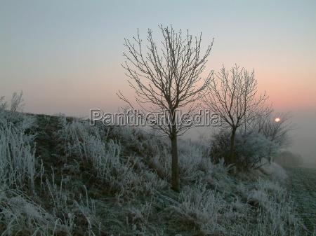 tree trees winter cold sunset ice