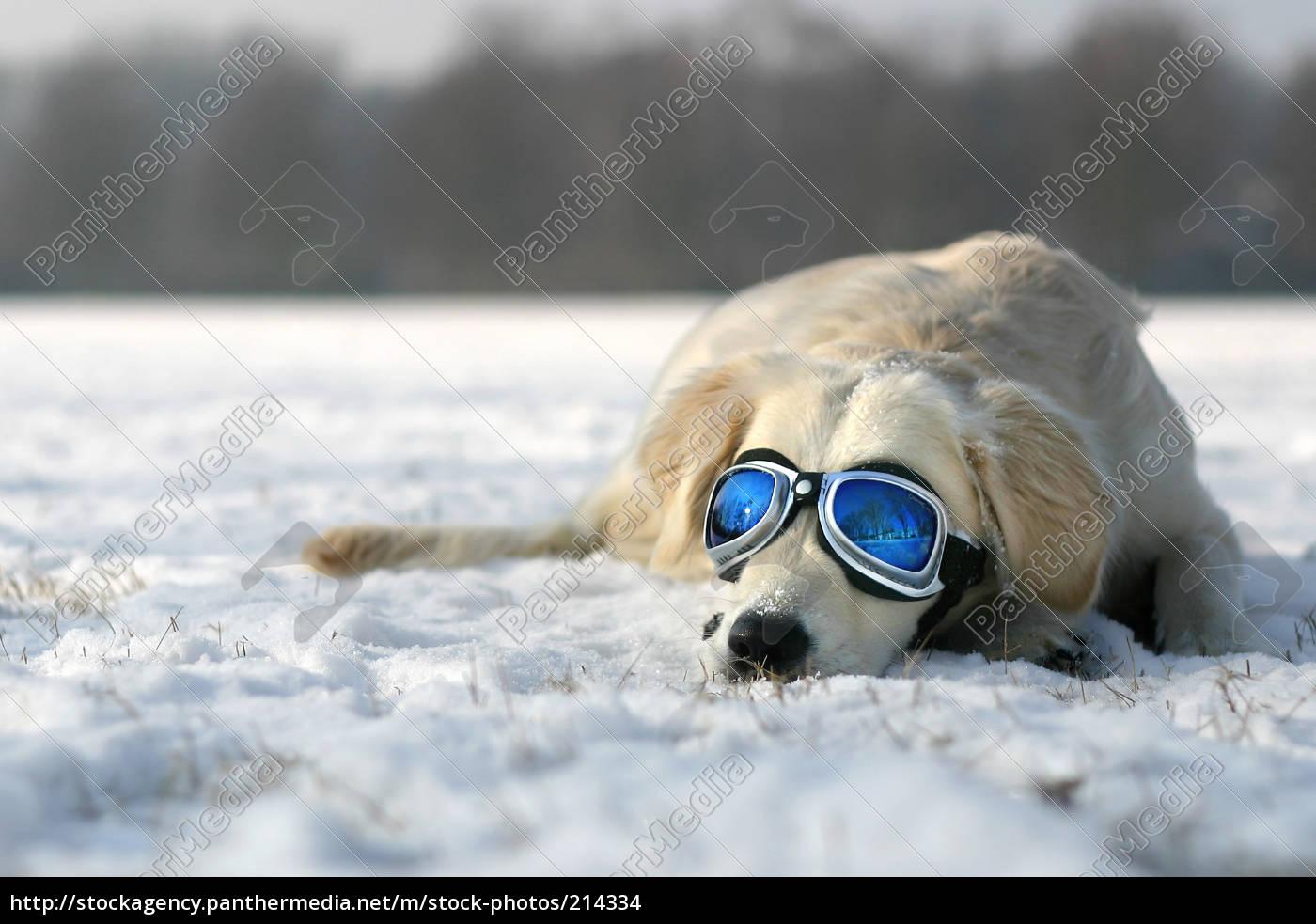 sun, no, inverno - 214334