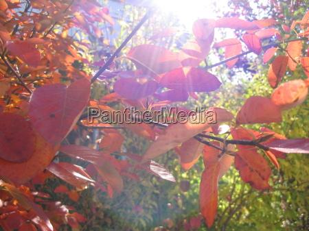 luz hojas otonyal contra la luz