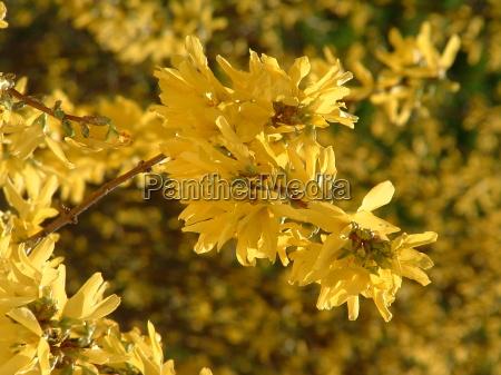 flor verao primavera arbusto humor luz