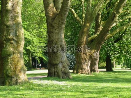 luz arvore parque jardim planta verde