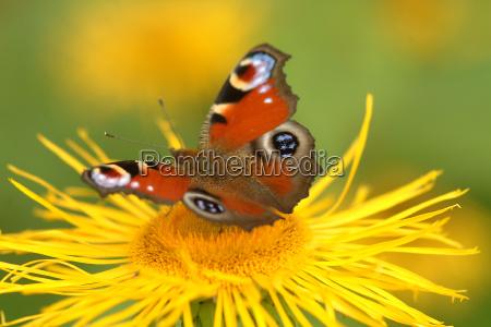 borboleta na flor 9
