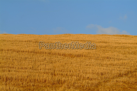 wheat field and sky 1