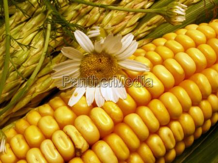 saude planta flor agricultura planta util
