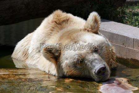 jogo desempenha jogar animal urso luz