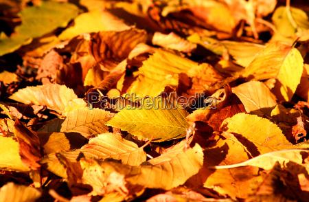 luz folha folhas colorido queda caso