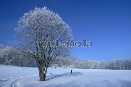azul arvore arvores inverno frio loner