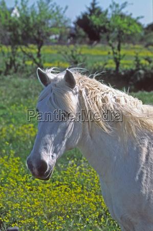 cavalo animais cavalos sul de franca
