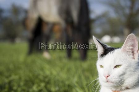 passeio cavalo animal de estimacao animais