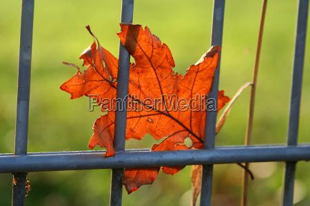 verde brilhar folhas de outono pagina
