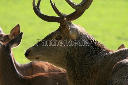 perfil verde marrom selvagem animais retrato