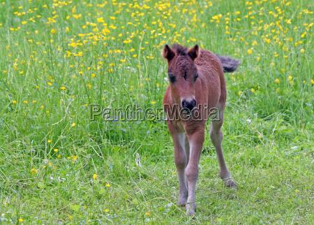 cavalo animal animais flor flores planta