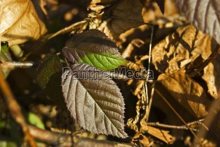 folha inverno verde confortavel marrom novo