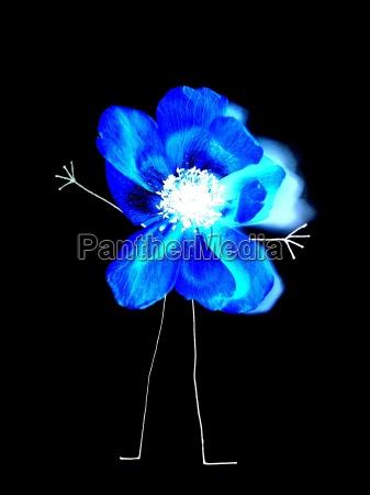azul jardim planta flor homem flores