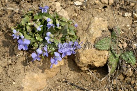 azul folha pedra verde marrom flor