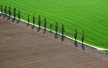 vista aerea luz arvore arvores verde