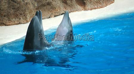 mamiferos animais de agua peixes danca