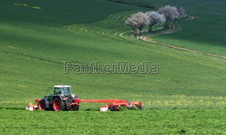 arvore arvores planta conduzir estupro agricultura
