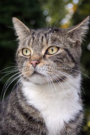 belo agradavel ver gato ressaca natureza