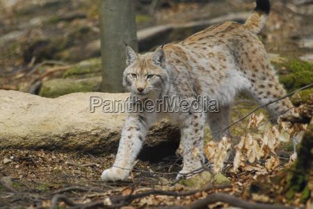 perigo animal mamifero boca parque nacional