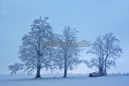 paisagem, mística, do, inverno - 1003035