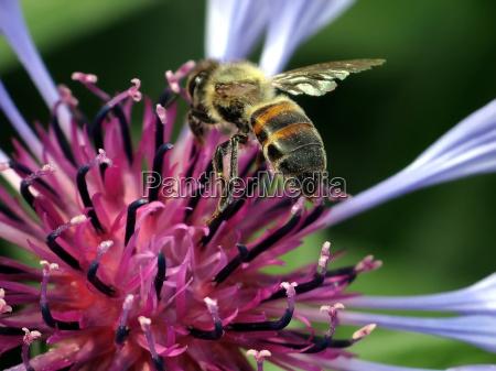 close up inseto flor animais natureza