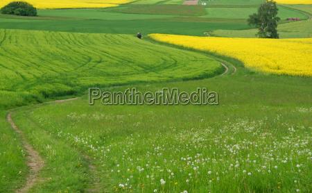 passeio estrada de terra primavera campos