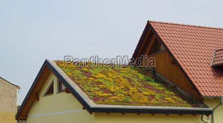telhado verde verde 01