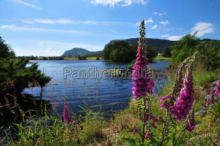 ferias flor flores planta noruega fiorde