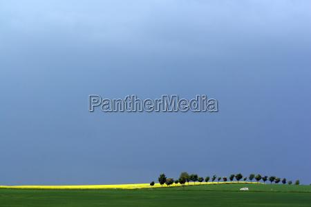 primavera tempestade tempestuoso linha de arvore